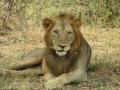 Wildlife-Safari-016