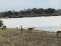 Wildlife-Safari-003