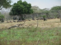 Wildlife-Safari-004