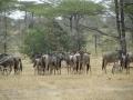 Wildlife-Safari-005