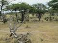 Wildlife-Safari-008