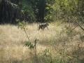 Wildlife-Safari-009